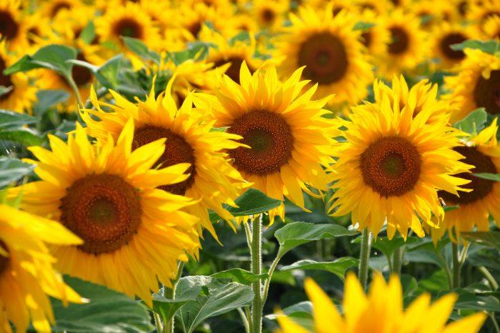 夏のプレゼントにおすすめのお花5選